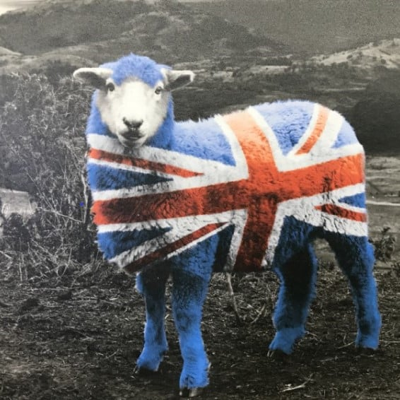 brockway wool carpets british made sheep